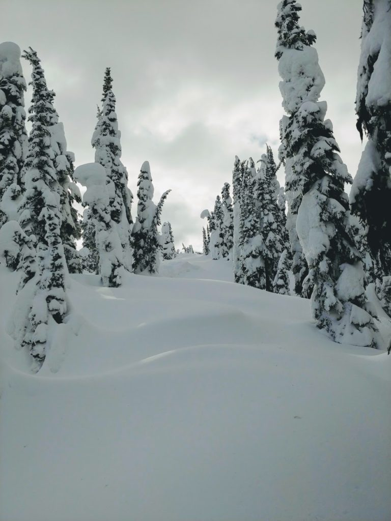 backcountry skiing tree corridor